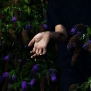 Nordmann : In Velvet