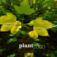 Umland 19, Plant 2000